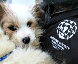 35 Dogs Rescued From Bas Saint Laurent Breeder Humane